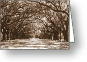 Live Oak Trees Greeting Cards - Savannah Sepia - Glorious Oaks Greeting Card by Carol Groenen