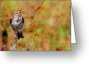 Savannah Square Greeting Cards - Savannah Sparrow . Texture . Square . 40D5883 Greeting Card by Wingsdomain Art and Photography