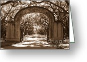 Tree-lined Greeting Cards - Savannaha Sepia - Wormsloe Plantation Gate Greeting Card by Carol Groenen