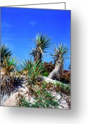 Vacation Destination Greeting Cards - Saw Palmetto Canaveral National Seashore Greeting Card by Thomas R Fletcher