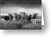 Livestock Greeting Cards - Say Cheese!! Greeting Card by Paul Witterick Photography