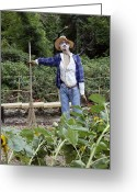 Frighten Greeting Cards - Scarecrow In A Garden Greeting Card by Tony Craddock