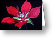 Hibiscus Tropical Drawings Greeting Cards - Scarlet Greeting Card by Anita Putman