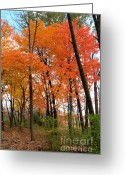 Barks Greeting Cards - Scarlet Grove Greeting Card by Deborah Smolinske