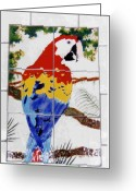 Wildlife Art Ceramics Greeting Cards - Scarlet Macaw Greeting Card by Dy Witt