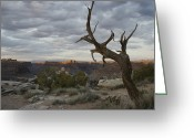 Trees And Rock Cliffs Greeting Cards - Scenic View Of Canyonlands With Mesas Greeting Card by Stephen Alvarez