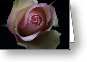 Flowers Pictures Greeting Cards - Scent of a Rose Greeting Card by Artecco Fine Art Photography - Photograph by Nadja Drieling