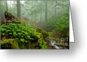West Greeting Cards - Scent of Spring Greeting Card by Evgeni Dinev
