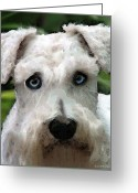 Rescue Animal Greeting Cards - Schnauzer Art - Smokey Greeting Card by Sharon Cummings