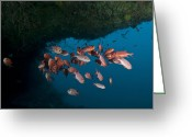 Cavern Greeting Cards - School Of Red Bigeye Under A Rocky Greeting Card by Mathieu Meur