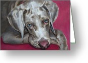 People Portraits Greeting Cards - Scooby Weimaraner Pet Portrait Greeting Card by Enzie Shahmiri