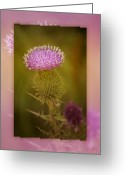 Thistle Greeting Cards - Scotch Thistle Greeting Card by Holly Kempe