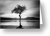Loch Greeting Cards - Scotland Milarrochy Tree Greeting Card by Nina Papiorek