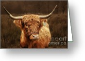 Horn Greeting Cards - Scottish Moo Coo - Scottish Highland cattle Greeting Card by Christine Till