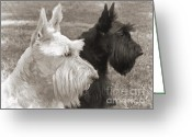 Terriers Greeting Cards - Scottish Terrier Dogs in Sepia Greeting Card by Jennie Marie Schell