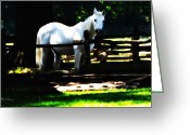 White White Horse Digital Art Greeting Cards - Scout Greeting Card by Bill Cannon