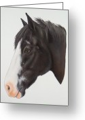 White White Horse Pastels Greeting Cards - Scout Greeting Card by Lucy Deane