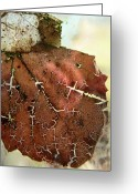 Brown Leaf Greeting Cards - Scrapbook Greeting Card by Odd Jeppesen
