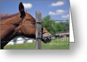 Quarter Horses Greeting Cards - Scratching Post Greeting Card by Juls Adams