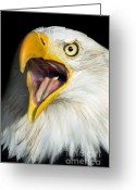 Strength Greeting Cards - Screaming Eagle Portrait Greeting Card by Artur Bogacki