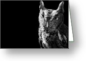 Animal Portrait Greeting Cards - Screech Owl Greeting Card by Malcolm MacGregor