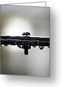 Raining Photo Greeting Cards - Screw This Rain Greeting Card by Lisa Knechtel