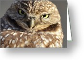 Burrowing Owl Greeting Cards - Scrutiny Greeting Card by Fraida Gutovich