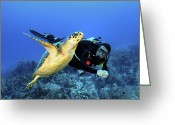 Hawksbill Turtle Greeting Cards - Scuba Diver Swimming With Hawksbill Greeting Card by Karen Doody