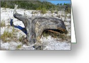Grayton Beach Greeting Cards - Sculpted by the Wind Greeting Card by Judy Wanamaker