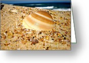 Seashell Photography Greeting Cards - Sea beyond the Shell Greeting Card by Kaye Menner