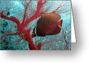 Undersea Greeting Cards - Sea Fan And Butterflyfish Greeting Card by Takau99