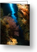 Crevice Greeting Cards - Sea Fans, Fiji Greeting Card by Todd Winner