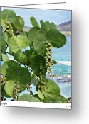 Sea Grape Digital Art Greeting Cards - Sea Grapes Greeting Card by Joseph Vittek