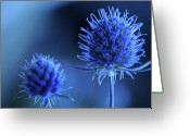 Thorn Greeting Cards - Sea Holly Flower Greeting Card by Sarah Cowan Photography