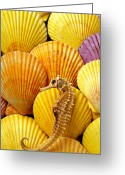 Snout Greeting Cards - Sea horse and sea shells Greeting Card by Garry Gay