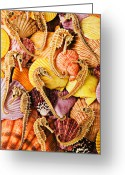Orange Greeting Cards - Sea horses and sea shells Greeting Card by Garry Gay