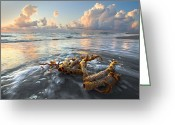 Bridge Greeting Cards Greeting Cards - Sea Jewel Greeting Card by Debra and Dave Vanderlaan