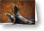 Seal Greeting Cards - Sea Lions Greeting Card by Carlos Caetano