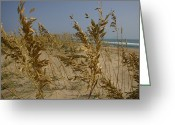 Atlantic Beaches Greeting Cards - Sea Oats, A Vital Plant To Anchor Greeting Card by Stephen St. John