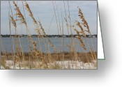 Sea Oats Digital Art Greeting Cards - Sea Oats Greeting Card by Abbie Loves Life