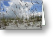 Sea Oats Digital Art Greeting Cards - Sea Oats at PCB Greeting Card by Anthony Allen