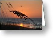 Sea Oats Digital Art Greeting Cards - Sea Oats at Sunrise Greeting Card by Gordon Mooneyhan