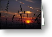 Oats Greeting Cards - Sea Oats Blow In The Breeze As The Sun Greeting Card by Stacy Gold