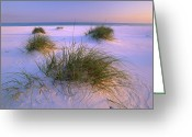 Santa Rosa Beach Greeting Cards - Sea Oats Growing On Beach Santa Rosa Greeting Card by Tim Fitzharris
