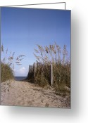 Wood Fences Greeting Cards - Sea oats line the path Greeting Card by Taylor S. Kennedy