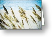 Sea Oats Digital Art Greeting Cards - Sea Oats Greeting Card by Tonya Laker