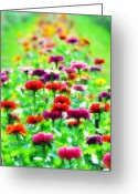 Flowerbed Greeting Cards - Sea of Flowers Greeting Card by Bill Cannon