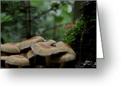 Forest Floor Photo Greeting Cards - Sea Of Heads Greeting Card by Odd Jeppesen