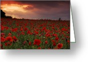 English Countryside Print Greeting Cards - Sea Of Poppies Greeting Card by John Chivers