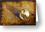 Shell Texture Greeting Cards - Sea Shell Greeting Card by Svetlana Sewell